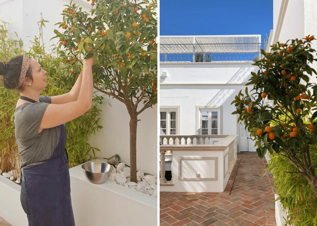 Kumquat Tree @ Casa Fuzetta, Olhao | Natural Kitchen Adventures